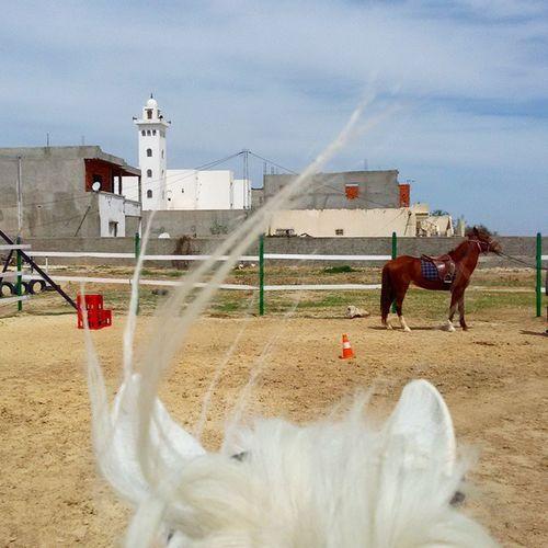 Horse Equestrian Club Kairouan tunisia igerstunisia mosque أول مرة نعمل فيها فارس :)