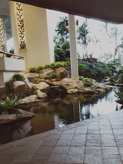 Landscape. Landscape Water Plant Architecture Built Structure Reflection Tree Building Exterior Outdoors
