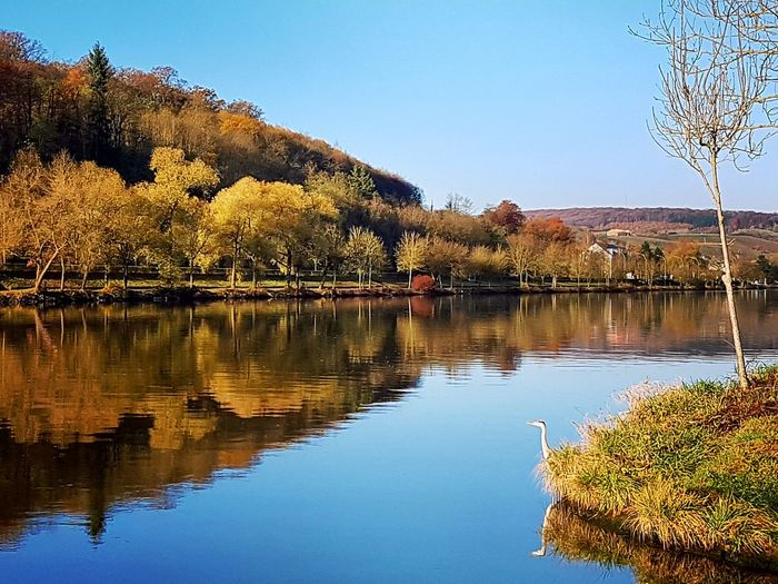 Reflection Water Scenics Outdoors Autumn Nature Tree No People Sky Beauty In Nature Day Clear Sky Mosel Mosel View Moselblick Moselle Valley Bird