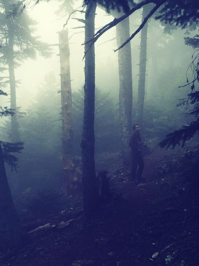 Parnitha hiking Parnitha Mountain Trees Forest Mist Attica Greece