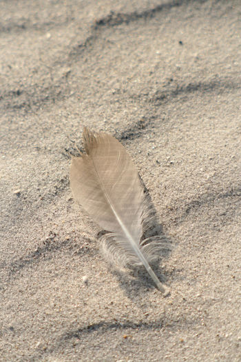 Beach Beauty In Nature Close-up Feather  Natural Pattern Nature No People Outdoors Sand