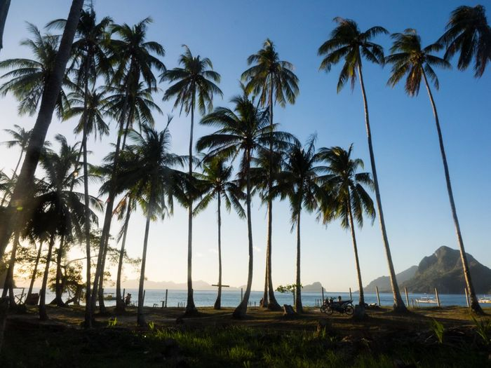 Coconut Palm Trees At Beach