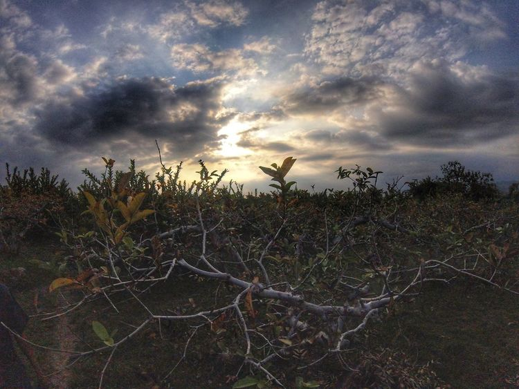 Growth Plant Nature Cloud - Sky Sky No People Outdoors Tranquility Tree Landscape Sunset Day Rural Scene Beauty In Nature