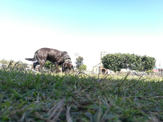 Dog Love Curiousity Playing One Animal Grass Sun Day Costa Rica