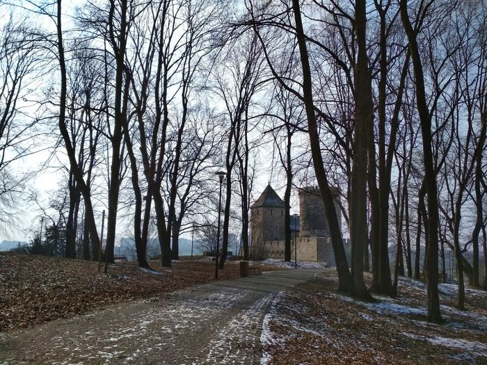 Old castle behind the trees in Bedzin, Poland Castle Trees City Będzin Poland Medieval Landscape