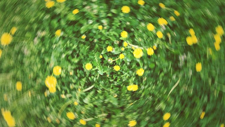 Blumenbeet - Yellow Flower Yellowmagic Nature Textures Circleoflife Motion Blur Lemon By Motorola