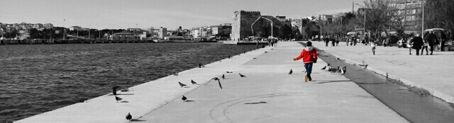 Taking Photos Hello World Enjoying Life Relaxing Hello World Birds Children Running Lifeisbeautiful Blackandwhite Seaside Runing Birds🐦⛅