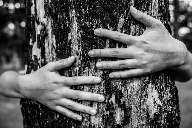 Close-up of hands embracing tree trunk