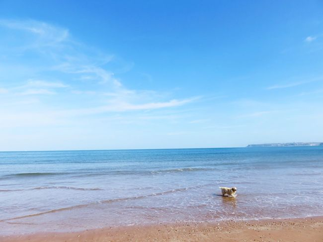 Sea Horizon Over Water Tranquility Tranquil Scene Scenics Beauty In Nature Water Nature Beach Sky Sand No People Idyllic Outdoors Day Dog EyeEmNewHere