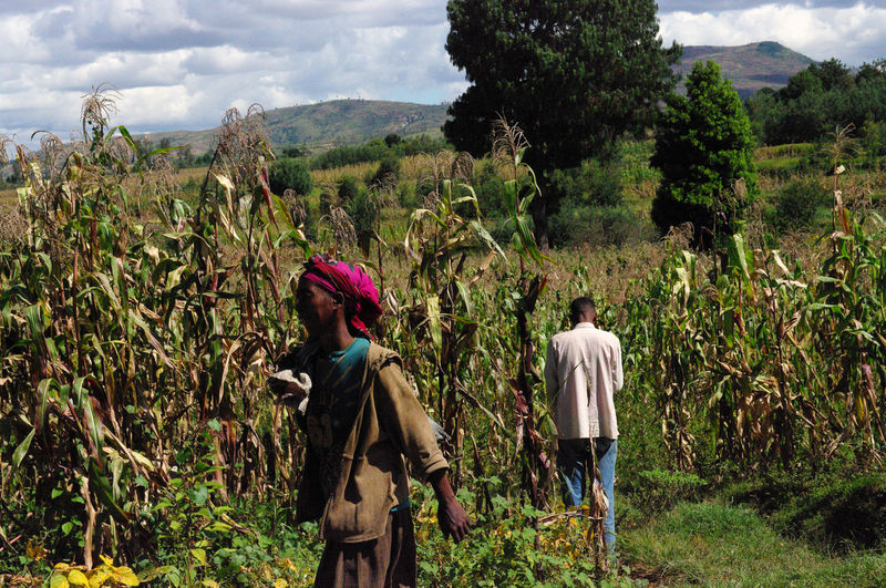 Agriculture Antsirabe Antsirabe Farm Worker Farmer Field Growth Landscape Madagascar  Men Mountain Nature Outdoors Plant Real People Rear View Rural Scene Scenics Standing Togetherness Tree Two People Walking Women Working The Traveler - 2018 EyeEm Awards Redefining Menswear