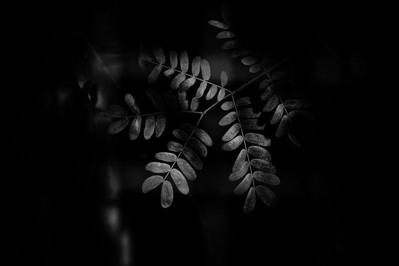 light Bnw Blackandwhite Light Nature Leaves Leaves🌿 Plant Flower Close-up Plant Leaves
