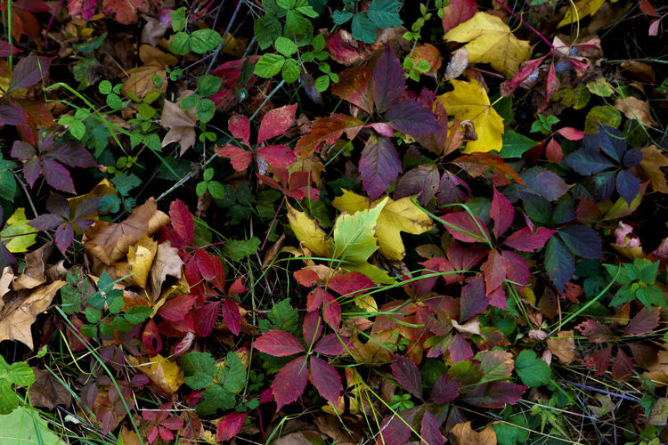 High angle view of autumnal leaves on field