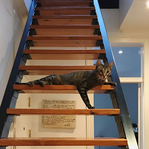 Cat relaxing on steps at home
