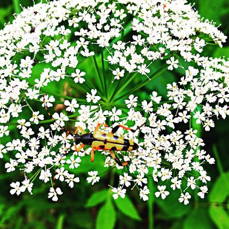 Flower Nature Plant Green Color Outdoors Insect Beauty In Nature Animals In The Wild Animal Themes The Week Of Eyeem Hello World One Animal Perfect Match Germany Photos Official EyeEm © EyeEm Best Shots White Color Black Forest Germany Tadaa Community From My Point Of View EyeEm Gallery Wildflower Landscape Perfect Moment