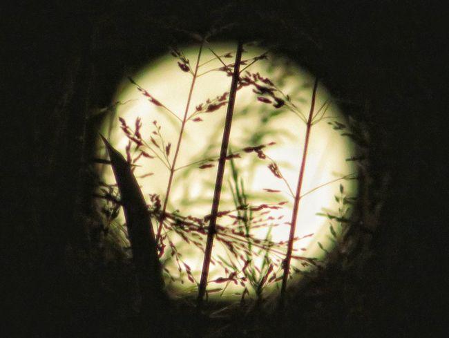 月 満月 草 秋 夜空 月光 月明かり 星空 Night Autumn Autumn Colors Beauty In Nature Plants Moon Full Moon Moonlight EyeEm Nature Lover EyeEm EyeEmNewHere Eyeemphotography Beautiful Nature 夜 イルミネーション Illuminated Illustration