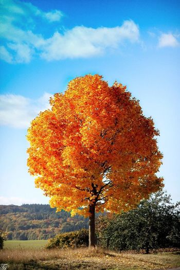 Autumn Beauty🍁🍂🌳 Nature Tree Sky Beauty In Nature Autumn Field Growth Tranquility Outdoors No People Cloud - Sky Grass Day Landscape Scenics Autumn The Great Outdoors - 2016 EyeEm Awards EyeEm Gallery Landscape_Collection Tranquil Scene EyeEm Best Shots - Nature Beauty In Nature Fall Colors Indiansummer