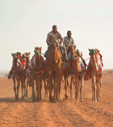 People Sitting On Camels At Desert Against Clear Sky