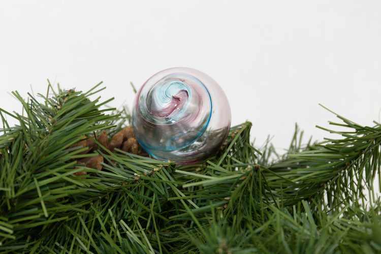 Close-up of christmas tree in jar