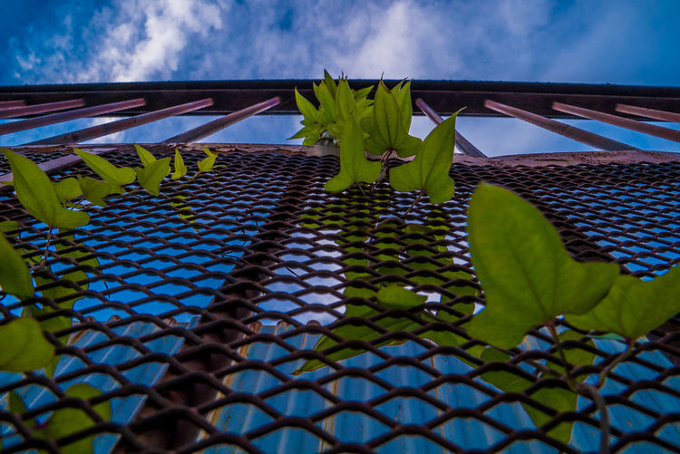 EyeEmNewHere Plants And Sky Architecture Beauty In Nature Blue Built Structure Close-up Cloud - Sky Day Flower Flowering Plant Freshness Green Color Growth Leaf Low Angle View Nature No People Outdoors Plant Plant Part Sky Skyscraper Street Streetphotography The Street Photographer - 2018 EyeEm Awards
