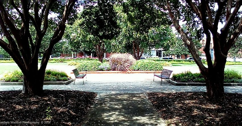 'Two benches, two shade trees' College Campus Benchlovers College Life Sidewalk Photograhy Benches And Branches Bench Lover  Benches_Of_The_World_Unite Auburn, Alabama Auburn University Benchesoftheworldunite Campus Grounds College Grounds Android Photography Snapseed