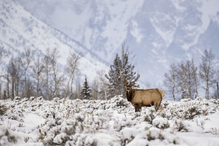 View of animal on snow covered field