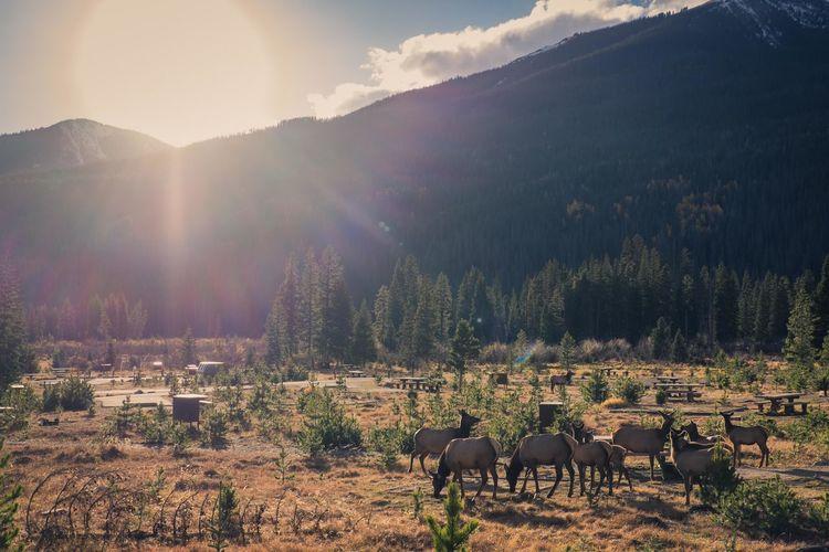 Elk standing on field against sky