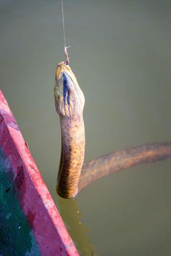 Snake In Lake