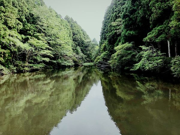 Reflection Water Tree Plant Sky Nature Day Lake No People Beauty In Nature Growth Outdoors Green Color