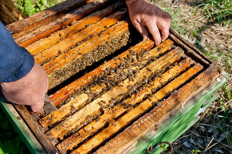 Human Hand Hand Human Body Part One Person Holding Day Nature Bee Real People Food APIculture Beehive Insect Animals In The Wild Occupation High Angle View Barbecue Outdoors Finger