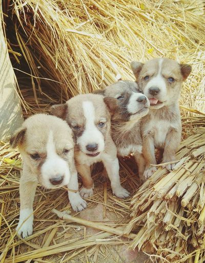Cute Littile Village Puppy's Family❤ Who Don't Care Anything Cage Portrait Animal Themes Close-up This Is Family