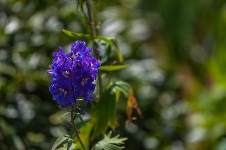 Purple in Spring Beauty In Nature Botany Close-up Day Flower Flower Head Flowering Plant Focus On Foreground Fragility Freshness Green Color Growth Inflorescence Nature No People Outdoors Petal Plant Purple Vulnerability