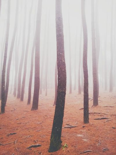 Fog In The Trees Hugging A Tree The Moment - 2014 EyeEm Awards EyeEm Nature Lover