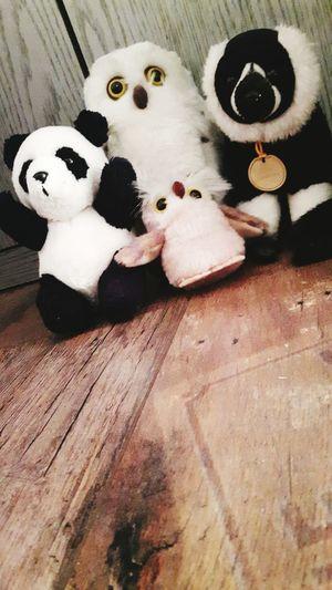 Endangered Species Savetheplanet Love Animals💕 First Eyeem Photo EyeEm Gallery EyeEm Best Shots Crazy Friends Love It ❤ Save Animals