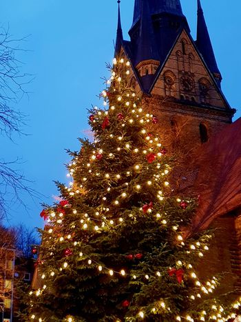 The Large Christmas Tree at Flensburg Christmas Market against the church and blue evening sky. ... Tree Christmas Decoration Christmas Celebration Christmas Lights christmas tree Tradition Religion Sky Bauble Decoration Christmas Market Festival Traditional Festival Christmas Ornament Celebration Event
