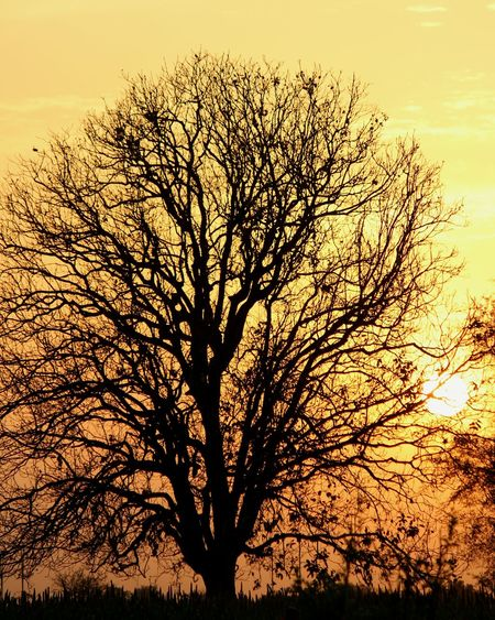 Showcase April Sunset Sunset_collection Sunset_captures Sun Behind The Tree Beauty In Nature Yellow Sky Scenery
