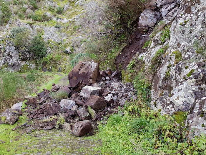 Nuns Valley Plants Disorder Curral Das Freiras Hiking Hiking Trail Green Color Photography Bildfolge Landscape_photography Madeira Island Mountain Mountain Range Rock - Object Danger Landslide Rockfall Day Nature No People Outdoors High Angle View Grass Beauty In Nature Plant Landscape Scenics Tree