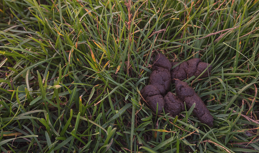 dog golden poop on the grass Grass Poop ShitHappens Brown Dirty Disgusting  Dog Droppings Dung Excrement Feces Happens Odor Puppy Shit! Shot Smell Soil Unhygienic Unpleasant