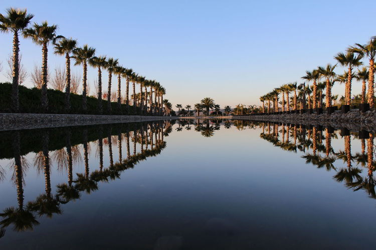 Reflection of palm trees in river