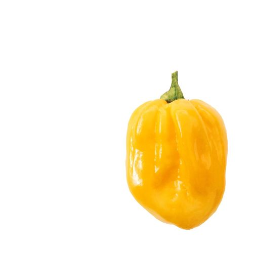 Yellow Scotch Bonnet chilli pepper Scotch Bonnet Chilli Pepper Chilli Hot Spicy Cooking Ingredient Yellow Minimalism Minimalist Spice