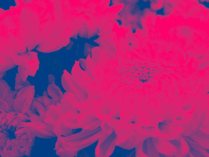 Pink Color No