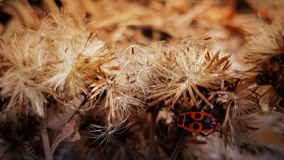 They're everywhere 😉 Premium Collection Focus On Foreground Nature EyeEm Best Shots EyeEm Nature Lover Feuerwanze Animal Animals In The Wild Flower Close-up Plant Insect