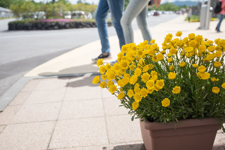 Low section of person with yellow flowers on sidewalk