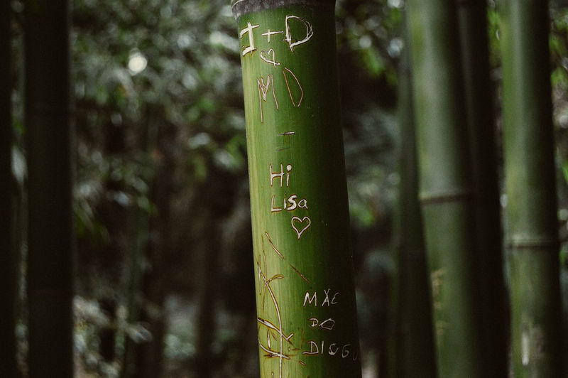 Hi Lisa <3 Text Communication Focus On Foreground Green Color Plant Close-up No People Tree Bamboo - Plant Day Forest Outdoors Nature Love Heart EyeEm Nature Lover Nature Photography Growth