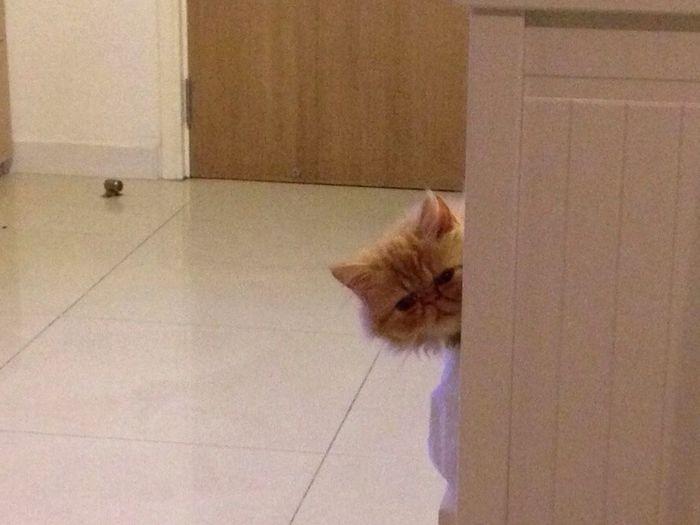 Boo! Cats Cat Cat♡ Kitten Kittens Cat Lovers