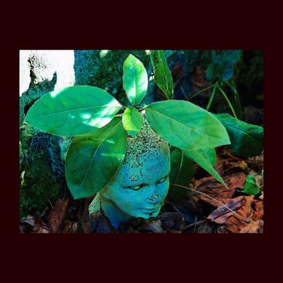 Personne ne croyait qu'une tête pousserait là, sauf Pierre peut-être... Pierre Durdilly Sculpture EyeEm Nature Lover Sculpture Garden Garden Green Eye Em Nature Lover EyeEmBestPics Leaves Creative