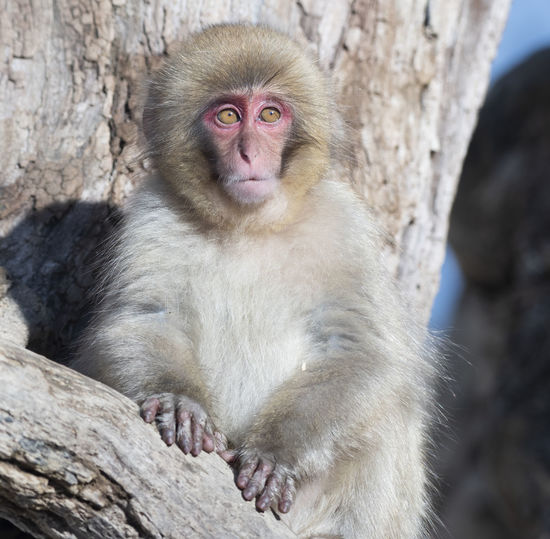 Close-up portrait of monkey sitting on tree