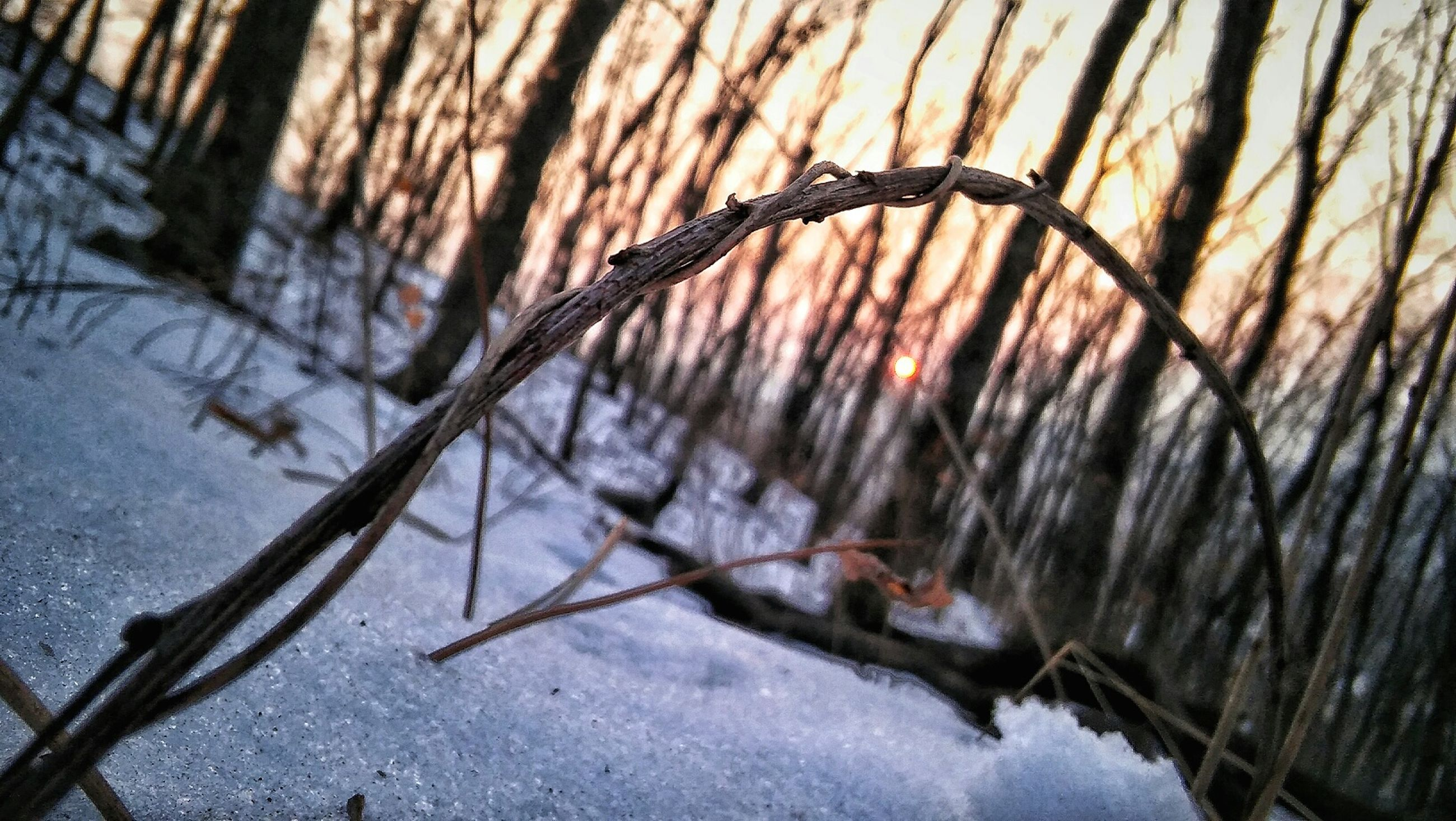branch, nature, tree trunk, close-up, dry, season, water, winter, fence, focus on foreground, tree, leaf, outdoors, wood - material, day, no people, tranquility, plant, twig, cold temperature
