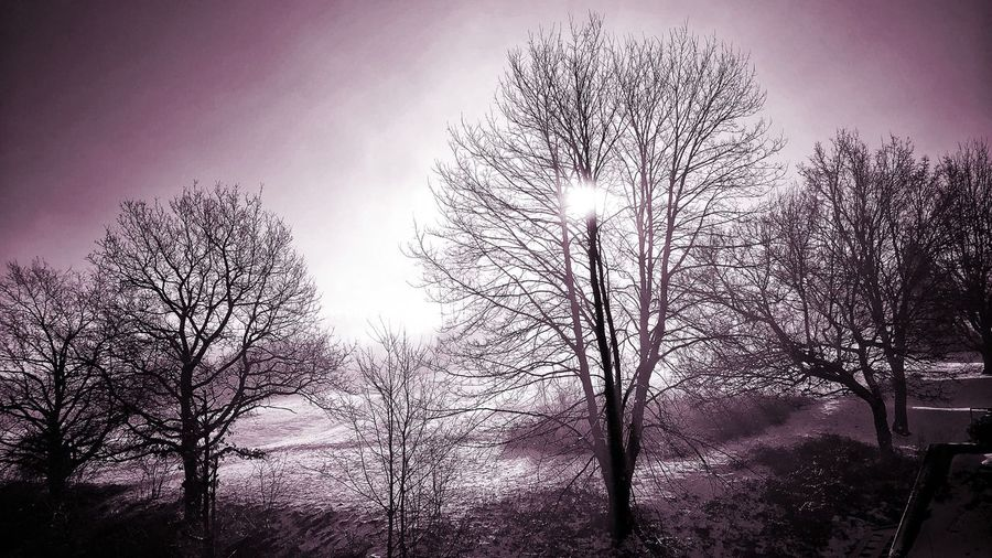 Morninglight Photography Photooftheday Picoftheday Lila Light Outside Photography Nature Photography Bare Tree Tree Branch Low Angle View Nature Beauty In Nature Tranquility Sky Outdoors Tranquil Scene Silhouette Day Scenics