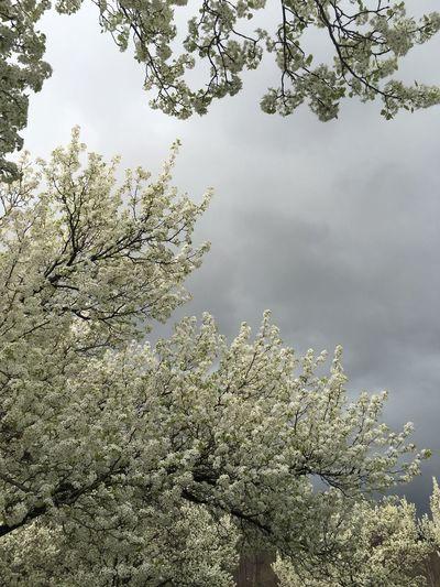 No Filter Harrisburg PA Showcase April Nature Natural Beauty Beautiful Beautiful Nature Sky Trees Spring No Filter, No Edit, Just Photography Harrisburg The Purist (no Edit, No Filter)