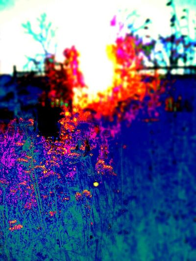 EyeEm Nature Lover EyeEm Editing Hatter Abstract Outdoors Multi Colored Flower Head Sky Beauty In Nature Colorado Springs CO USA EyeEm Creativity Taking Pictures Editing Photos On Steroids Creative License